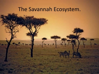 The Savannah Ecosystem.