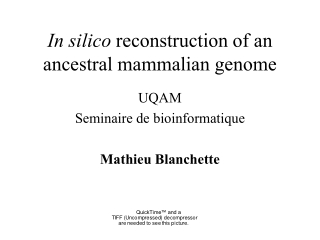 In silico  reconstruction of an ancestral mammalian genome