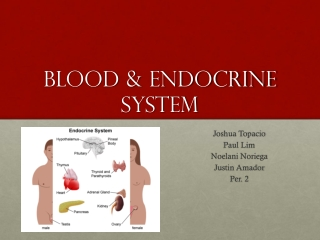 Blood & Endocrine System