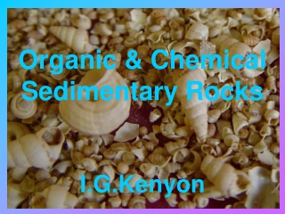 Organic & Chemical Sedimentary Rocks