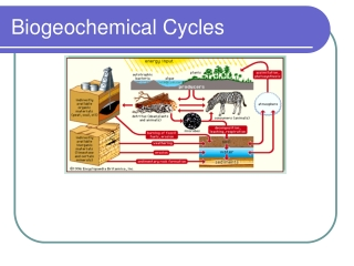 Biogeochemical Cycles