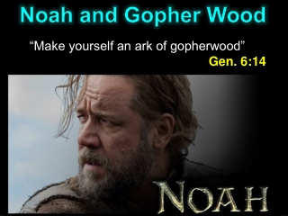 Noah and Gopher Wood
