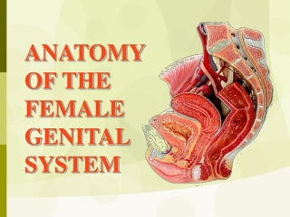 ANATOMY OF THE  FEMALE GENITAL SYSTEM