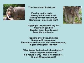 The Savannah Bulldozer