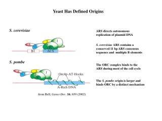 Yeast Has Defined Origins