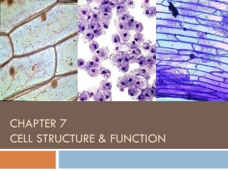 Chapter 7  Cell Structure & Function