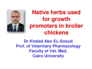 Native herbs used for growth promoters in broiler chickens