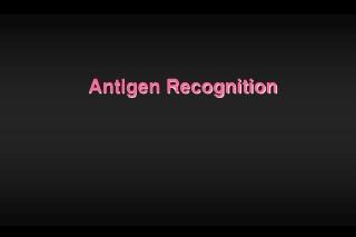 Antigen Recognition