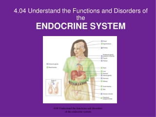 4.04 Understand the Functions and Disorders of the  ENDOCRINE SYSTEM