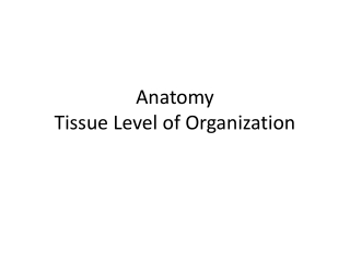 Anatomy Tissue Level of Organization