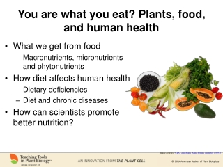 You are what you eat? Plants, food, and human health