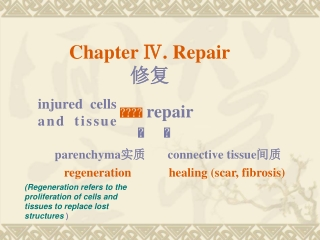 Chapter Ⅳ. Repair 修复