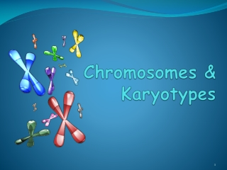 Chromosomes & Karyotypes