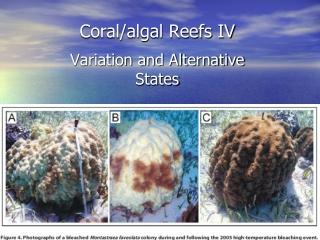 Coral/algal Reefs  IV