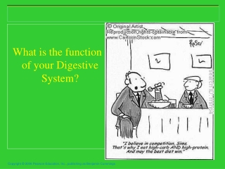 What is the function of your Digestive System?