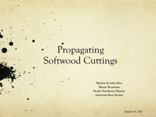 Propagating Softwood Cuttings