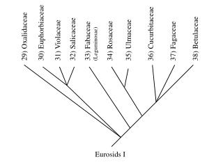 Eurosids I