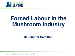 Forced Labour in the Mushroom Industry