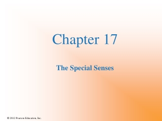 Chapter 17 The Special Senses