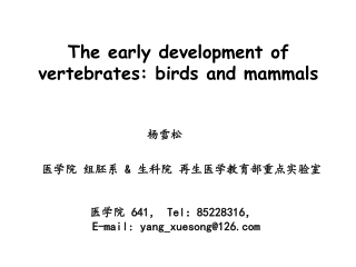The early development of vertebrates: birds and mammals