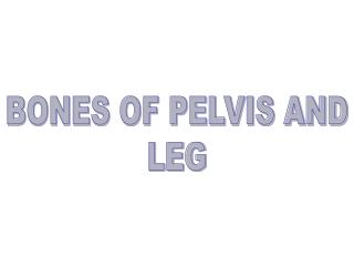 BONES OF PELVIS AND LEG