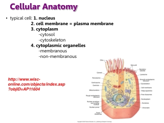 Cellular Anatomy