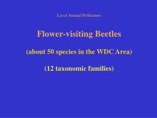 Local Animal Pollinators Flower-visiting Beetles (about 50 species in the WDC Area)