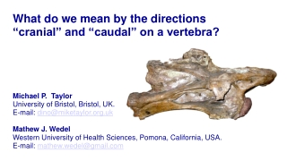 "What do we mean by the directions ""cranial"" and ""caudal"" on a vertebra?"