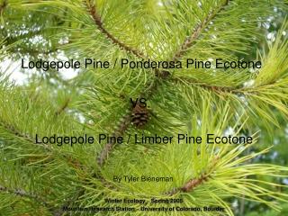 Lodgepole Pine / Ponderosa Pine Ecotone
