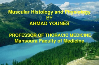 Muscular Histology and Physiology BY AHMAD YOUNES PROFESSOR OF THORACIC MEDICINE