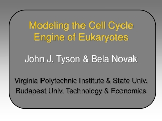 Modeling the Cell Cycle Engine of Eukaryotes