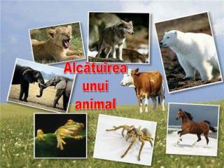 Alcătuirea unui animal