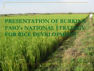PRESENTATION OF BURKINA FASO ' s NATIONAL STRATEGY FOR RICE DEVELOPMENT