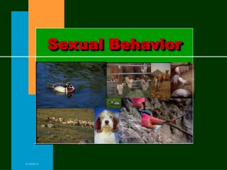 Sexual Behavior
