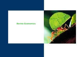 Bovine Economics