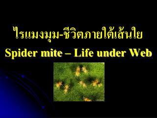 ไรแมงมุม-ชีวิตภายใต้เส้นใย Spider mite – Life under Web