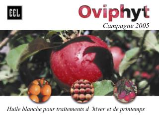 Campagne 2005