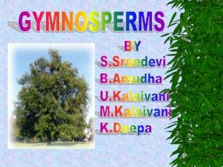 GYMNOSPERMS