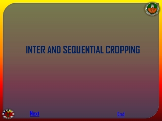 INTER AND SEQUENTIAL CROPPING