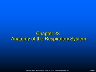Chapter 23  Anatomy of the Respiratory System