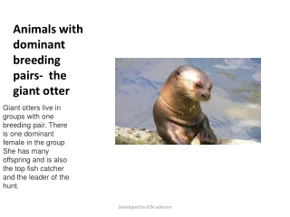 Animals with dominant breeding pairs-  the giant otter
