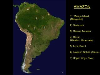 Maraj ó Island (Marajoara) 2) Santarem 3) Central Amazon 4) Gavan (Western Venezuela)