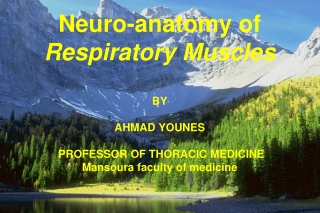 Neuro-anatomy of  Respiratory Muscles BY AHMAD YOUNES  PROFESSOR OF THORACIC MEDICINE
