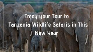 Enjoy your Tour to Tanzania Wildlife Safaris in This New Year