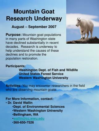 Mountain Goat Research Underway August – September 2007