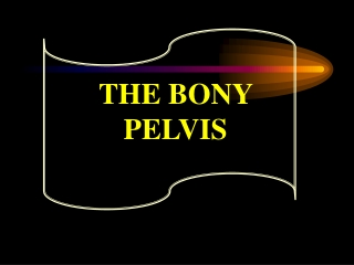 THE BONY PELVIS