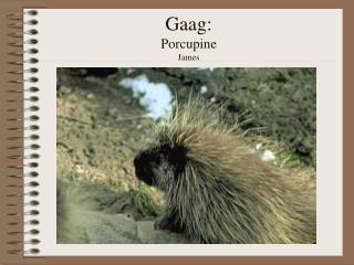 Gaag: Porcupine James