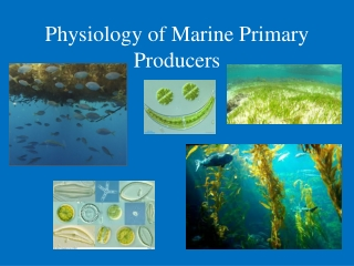 Physiology of Marine Primary Producers