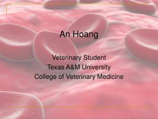 An Hoang Veterinary Student Texas A&M University  College of Veterinary Medicine