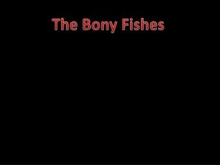 The Bony Fishes